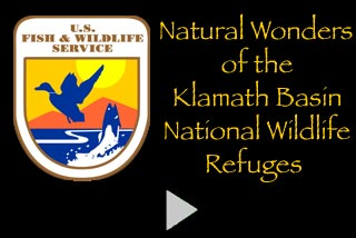 A four minute video showing the natural wonders of the Klamath Basin National Wildlife Areas.